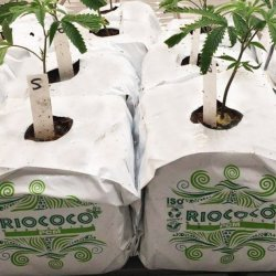 Coco Peat and Coir Substrate: A Great Way to Grow High-Quality Medical Marijuana